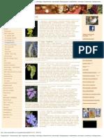 Virágeszenciák - Hangmasszázs, Bach virágterápia, kineziológia, reflexológia