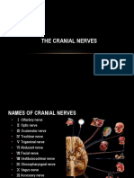 Cranial Nerves Opkey