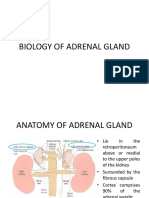 Biology of Adrenal Gland