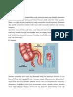 Peritonitis Ec Appendisitis Perforasi (1)