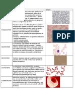 Células Hematologícas