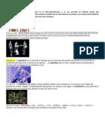 CIENCIAS BIOLOGICAS, Ciencias Fisica Soli