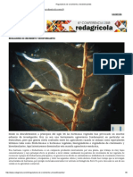 Reguladores de Crecimiento y Bioestimulantes