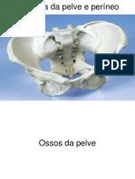 Anatomia-da-Pelve-e-Perineo-1.pdf