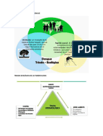 Triada Ecológica Del Dengue