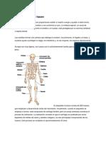 Los Huesos y Qué Hacen