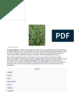 Annual Plant