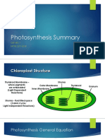 Photosynthesis Summary