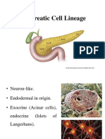 Pancreatic Cell Lineage