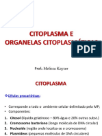 Aula 1.1 - Citoplasma e Organelas Citoplasmáticas