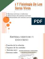 Sisitema Nervioso Grupo5 3ºB