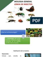 PRIMERA CLASE ENTOMOLOGÍA.pptx