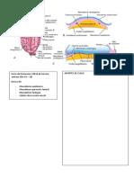 Embriología Cardiovascular