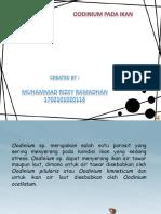 Oodinium Pada Ikan