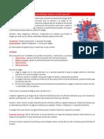 Parcial 1 - Fisiología