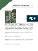 219463482 Rachel Pollack Arcanos Menores Parte1 PDF