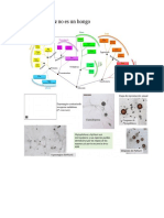 imprimir ciclos de hongo (2).docx