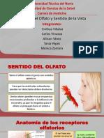 Anatomia Ojo Olfato(1)