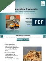 ORNAMENTAL 5.pdf