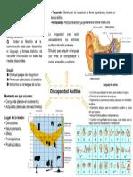 Mapa D.auditiva Listo
