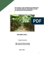 Analisis-musaceas.pdf