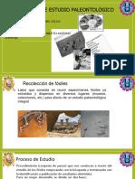 Proceso de Estudio Paleontologico exposicion
