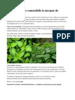 Plante Comestibile Multe