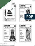 Ahd 2019 Clase 7 Músculos de La Región Cervical y Región Dorsal