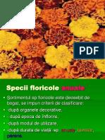 Specii floricole-anuale-bienale-perene