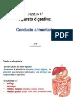 Cap.17 Sistema Digestivo Tubo Digestivo EXPO 4