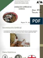 Insemiinacion Artificial en Caninos