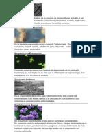 5 Bacterias, 5 Virus (Definicion e Imagen)