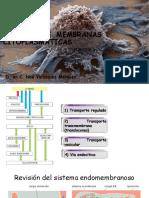 3) Sistema Membranoso 2015