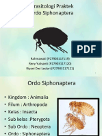 Parasitologi Praktek - Ordo Siphonaptera.pptx