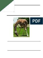 -Proyecto-de-Los-Animales.docx