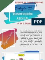 Reproducción Asexual.pdf