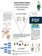 cartel de proteinas.pptx