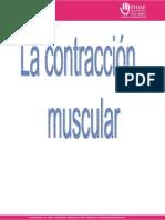 Contraccion Muscular Converted