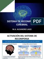 Sistema de Recompensa Cerebral