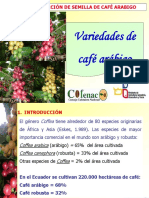 1. Variedades de Café Arábigo