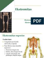 6. Anatomi Tulang-ekstremitas Superior Inferior