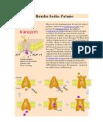biologuia transportes.docx
