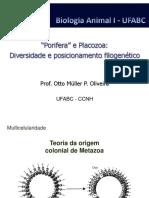 Aula 04 - Porifera & Placozoa