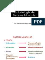 11 Muscular
