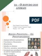 Zoologia - O Estudo Dos Animais