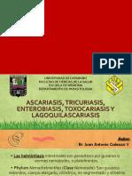 Ascaris Trichuris Enterobius Toxocara Lagosquilascariasis