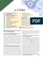 Histologia Ross 7 Resumen de Organelos