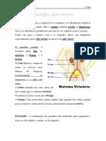 3º Ano-funcao_excretora (1)