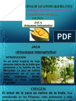 Cultivo de Yaca