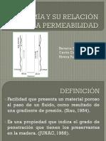 Anatomía de la Madera y su Relación con la Permeabilidad